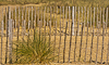 120922-4296 Marram Grass & fencing to prevent erosion at Walberswick beach